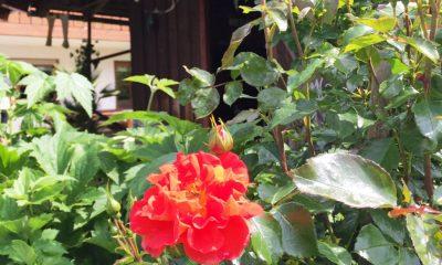 Unser Garten mit Terrasse und Liegewiese